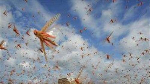 Szarańcza atakują wioski i miejscowości turystyczne